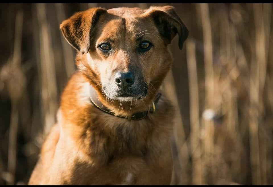 Wykastrowany pies - Felix Lubliniec - image 1