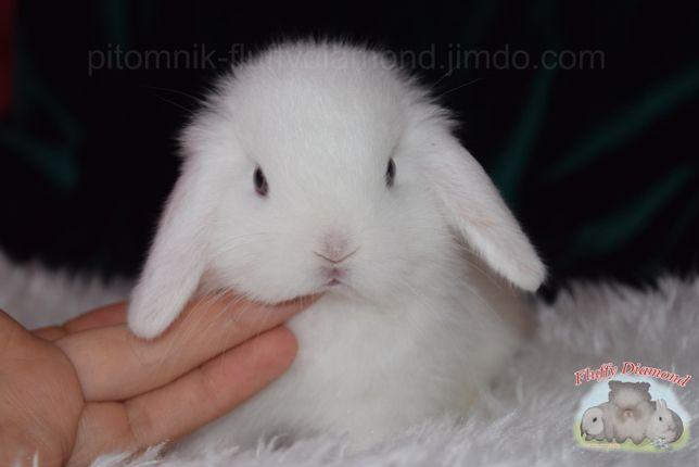 Роскошные белые голубоглазые крольчата из питомника. Вислоухий кролик