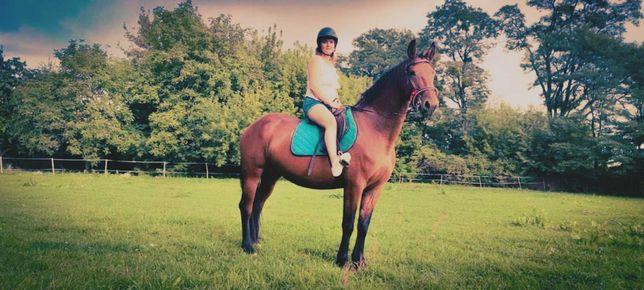 Udostepnie Konia Do Jazdy