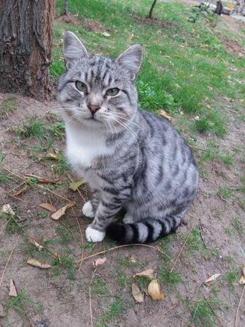 Котик Патрик ищет дом