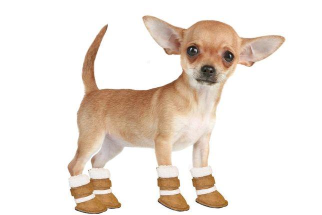 Обувь для собачки , обувь для животных, замеры на фото