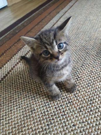 Віддам в хороші руки кошенят