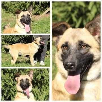 Мотя, Матильда, собака солнышко, активная и контактная