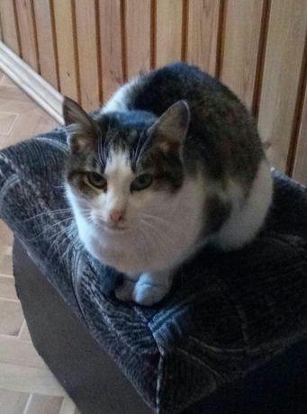 стерилизованная кошка добрым людям