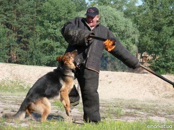 Дрессировка собак. Кинолог. Гостиница Борисполь