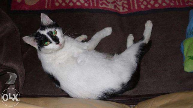 Ufna Mia czeka na adopcję