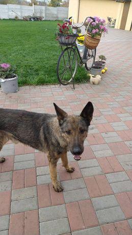 Найдена собака в районе с.Новослободка