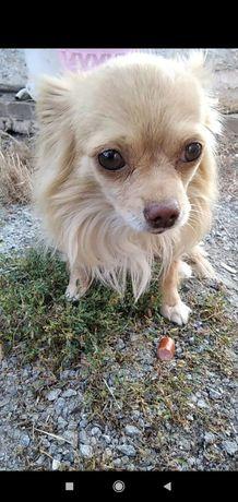 Пропала собака в районе Каштана