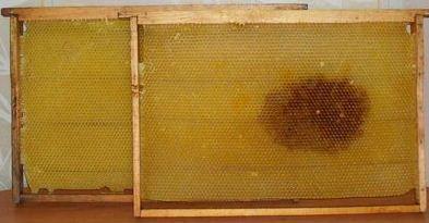 Сушь, рамки для пчел (Дадановская на 300)