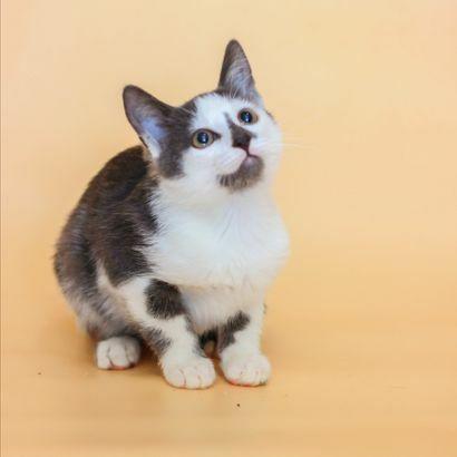 Котенок Лиям ищет семью котенок котята кошеня кот кошка котеня кошеня
