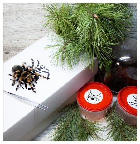 паук птицеед подарочный набор тарантул павук корм субстрат пинцет терр