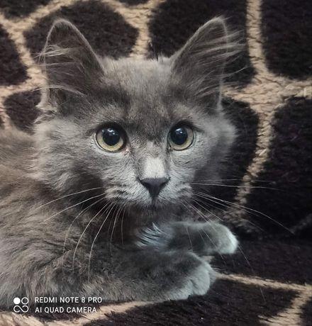 Котенок четыре месяца