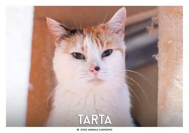 Tarta - nieśmiała koteczka czeka na dom w OTOZ Animals Ciapkowo.