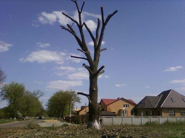 Спиливание, омоложение деревьев.Корчевание пней.Расчистка, покос травы