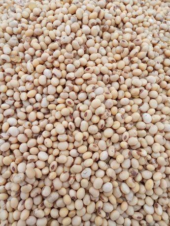 Продам насіння сої «Вітбі» та ячменю