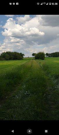 Ziemia rolna z siedliskiem