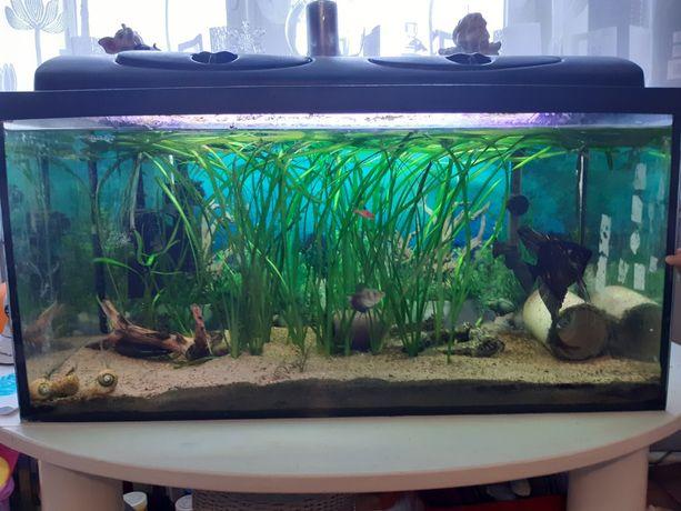 Akwarium z osprzętem rybkami , roślinami