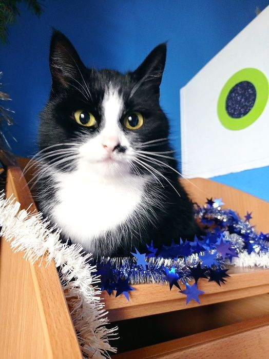 Черно-белый котенок подросток, ласковая кошка Киев - изображение 1