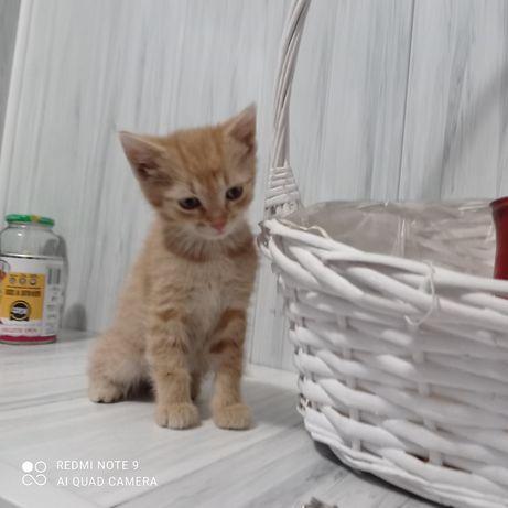 Oddam śliczne kotki