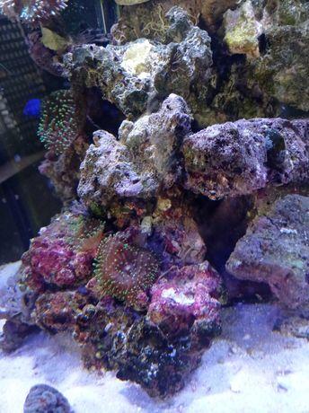 Akwarium morskie żywa skała