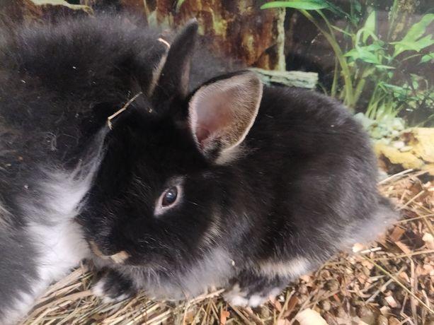 Мини кролик  декоративный