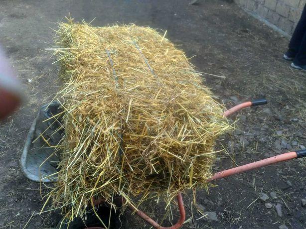 Продам сено в тюках, тюк солом. Высший сорт. Люцерна и луговые травы