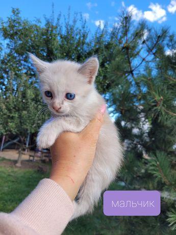Котёнок в добрые руки доставка в район