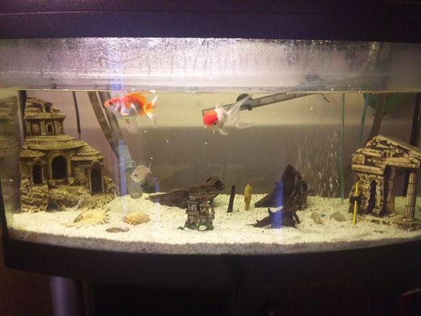 Akwarium 80l z osprzętem, bez rybek.