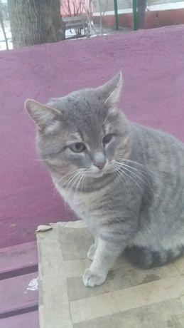 Котик мечтает о доме!