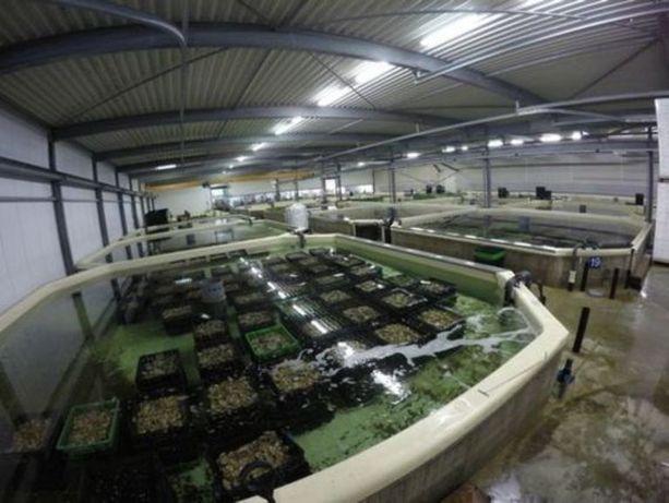 Vendo depuradoras de bivalves