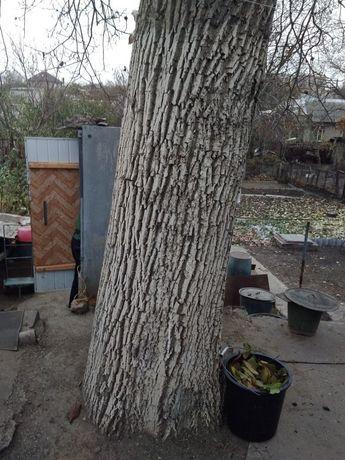 Срочно, дерево ореха для мебели