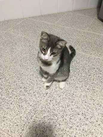 Gato para adoção - 5 meses