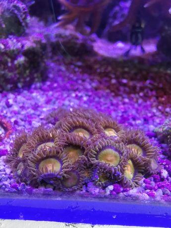 """Corais moles """"fáceis"""""""