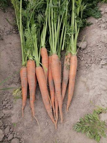 Marchewka, ziemniaki, buraki czerwone, cukinia, marchew, młode warzywa