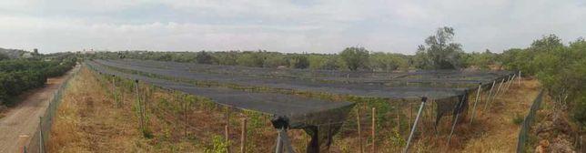 Aluguer terreno agricola
