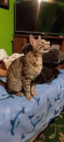 zaginął kotek na ul pomorskiej w jastrzębiu
