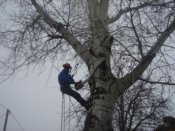 СПИЛ деревьев АЛЬПИНИСТАМИ или с вышкой. Дробилка, измельчитель веток.