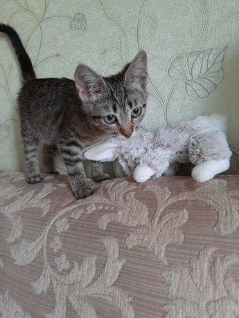 Кішечка (2,5 місяців), ручна і дуже грайлива, шукає новий дім