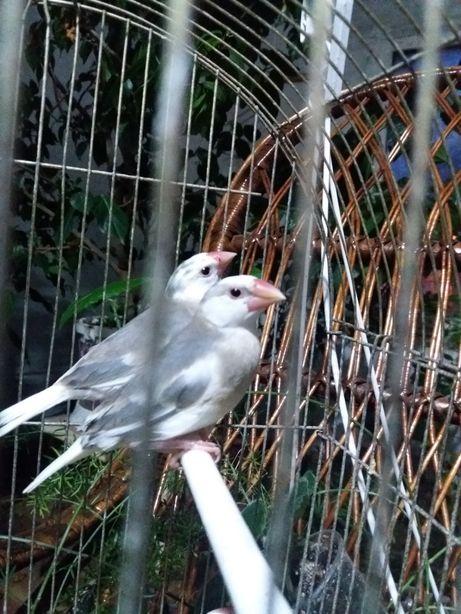 рисовки-птицы релакс