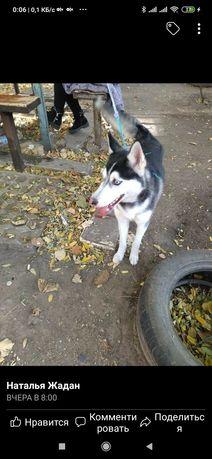 Пропала найдена собака Хортица
