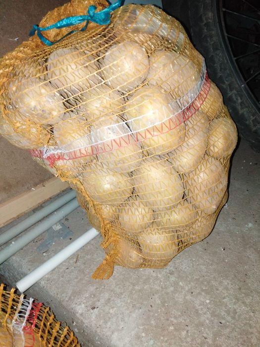 Ziemniaki lord Mirzec-Czerwona - image 1