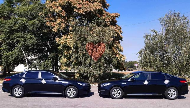 Заказы автомобилей,  свадебные авто