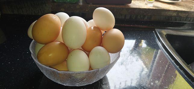 Jajka swojskie tanio