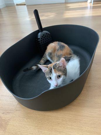 Caixa de areia LURVIG para gato e pá (Ikea)