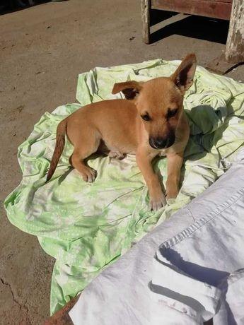 Маленька собачка цуценя шукає дім