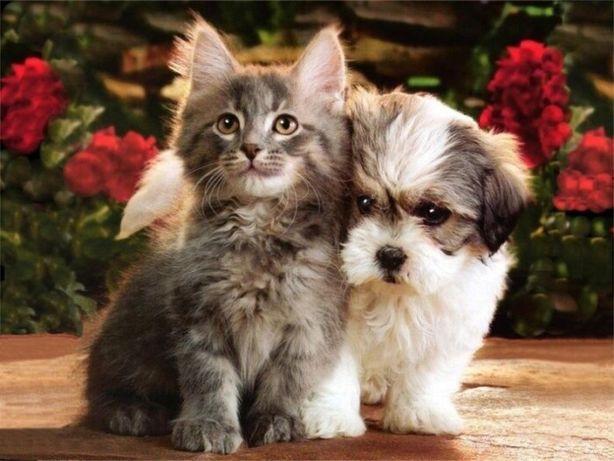 Отдам в хорошие руки котят и щенков (дворняжки)