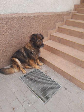 Oddam psa