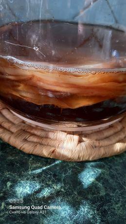 Чайный гриб, гриб чайный