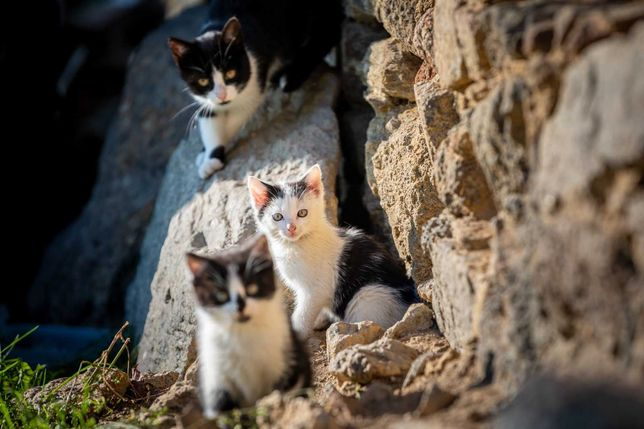 cudo kotki do adopcji