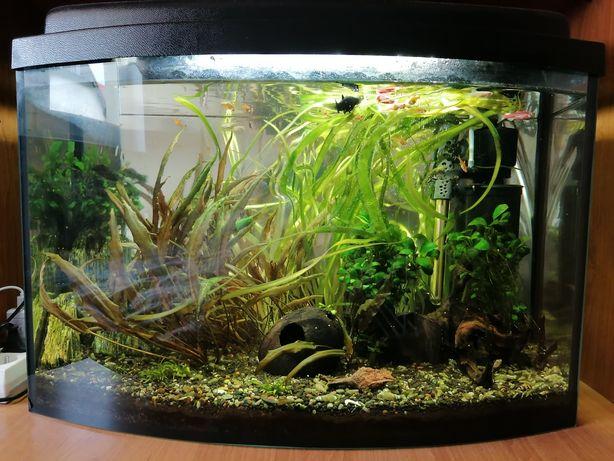 Akwarium z wyposażeniem i zawartością